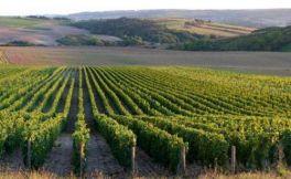 惊喜,法国勃艮第产区的葡萄酒产量将达到1.5亿升