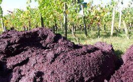 WHAT?原来葡萄酒渣能转化为保健品!