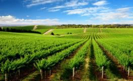 这些脑洞大开的葡萄酒产区记忆方法,朕是服气的!