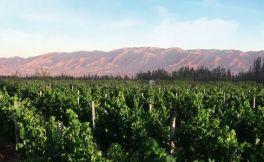 宁夏葡萄酒产区,极具吸引力的葡萄酒产区!