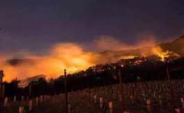 新旧世界产区不断遭遇意外,明年还会有葡萄酒喝吗?
