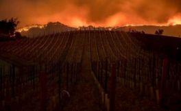 科技巨头们捐赠250万美元协助加州大火的救援工作