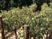 今年的干旱状况导致明年南非葡萄酒减产50%
