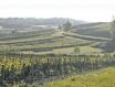 法国夏隆内丘(Cote Chalonnaise)产区