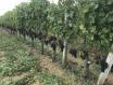 全球变暖是会影响葡萄酒的酒精度