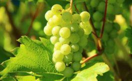 今年欧洲多地葡萄酒价格有可能上涨