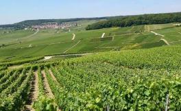 法国马恩河谷(Vallee de la Marne)产区