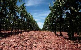 土壤会对葡萄酒的味道产生影响吗?