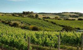 泰瑞贵族酒庄(Vinedos Terra Noble)