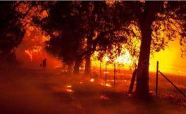 加州森林大火整体影响通告