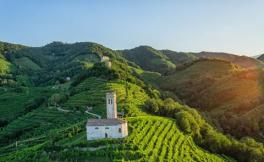 今年意大利瓦多比亚德内普洛塞葡萄产量下降10%