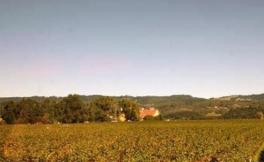 加州葡萄酒商开始恢复对外营业