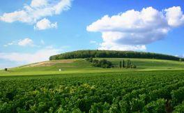 法国白丘(Cote de Blancs)产区