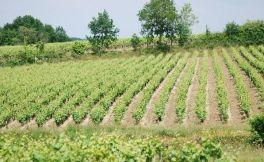 法国南特(Nantais)产区