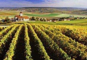 法国桑塞尔(Sancerre)产区