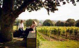 在过去的一年里,英国葡萄酒酒商数量增长了13%