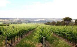 澳大利亚葡萄酒管理局发布最新出口数据,中国是澳洲葡萄酒第一大出口市场