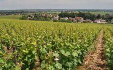 鲁瓦切酒庄(Domaine Sylvain Loichet)