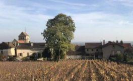 里涅·米谢露酒庄(Domaine Lignier-Michelot)