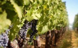 今年前7个月,意大利葡萄酒出口额达到了33亿欧元