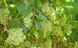 阿贺酒庄(Domaine de l'Aure)