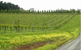 普泰罗酒庄(Protero Wines)