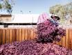 进口葡萄酒数量日益增加,澳洲葡萄酒占比大