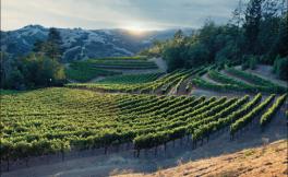 今年的加州葡萄品种非常优质的!