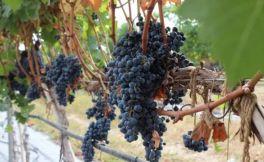 你的葡萄酒为什么好喝?都是来源葡萄这些成份