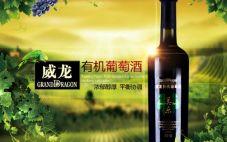 威龙有机干红葡萄酒价格是多少 威龙有机干红葡萄酒介绍