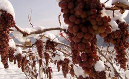 北冰红葡萄酒的口感如何?