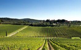 今年西班牙的葡萄价格注定是上涨的