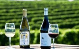 2017德国13大葡萄酒产区采收报告新鲜出炉:产量低,质量高