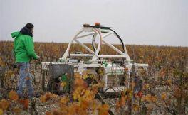 今年很多酒庄都把机器人引入葡萄园里耕作