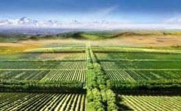 威龙葡萄酒公司投资1.39亿元人民币在澳洲建设有机葡萄园