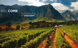 进口酒商必看:1篇数字文章看懂南非葡萄酒产业