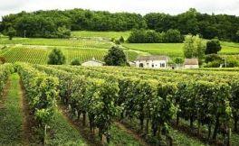法国的红酒文化,涨知识了!