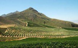 由于今年遭受干旱灾害,明年南非葡萄酒产量将会下降
