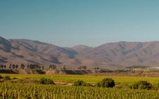 麦卡斯酒庄(Maycas del Limari)