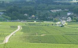 勒弗莱酒庄(Domaine Leflaive)