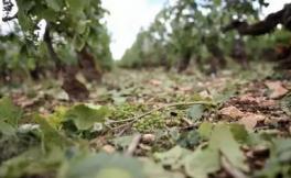 葡萄酒生产国纷纷涨价,国内进口商采取不同的应对措施