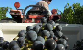 华盛顿州未来将会继续盛产红葡萄混酿酒