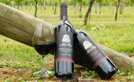 2017年新西兰葡萄酒出口总额达16.6亿美元,再创历史新高