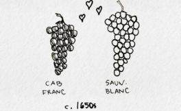 【简笔画】葡萄酒文化发展历程