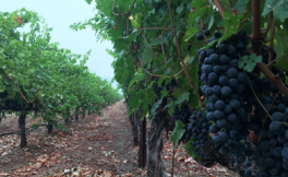 2017年度Wines & Vines八大新闻