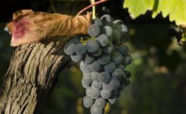 新旧世界葡萄酒文化的差异