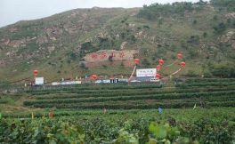 """卢龙产区重点打造""""葡萄酒+旅游""""战略项目"""