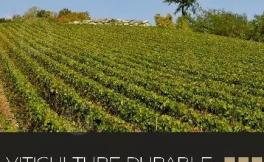 张祎:2018年以至更远的将来,可持续栽培都将是香槟区奋斗的方向