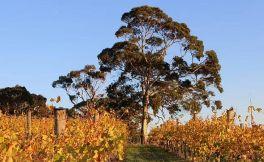 阿尔塔岭酒庄(Alta Ridge Vineyards)