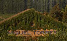 智利桃乐丝酒庄(Miguel Torres Chile)